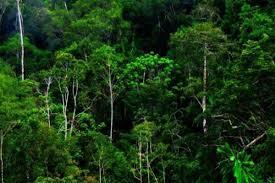 Greenpeace Anggap Putusan KI Pusat Kemenangan Publik